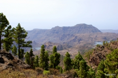 Roque Nublo a Presa de Las Ninas - Gran Canaria (15)