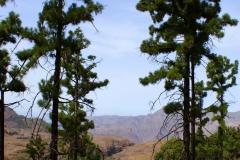 Roque Nublo a Presa de Las Ninas - Gran Canaria (19)