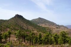 Roque Nublo a Presa de Las Ninas - Gran Canaria (21)