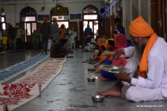Amritsar - Templo de Oro - Langar - Gente disfrutando de un almuerzo gratis