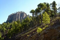 16KM - Data de las Ninas - Vuelta a la Sandara - Gran Canaria (1)