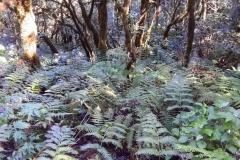 El Bosque Encantado, Anaga, Tenerife