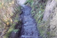 Bosque-Encantado-Anaga-Tenerife-14