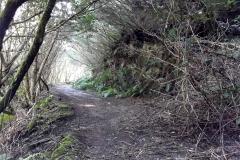 Bosque-Encantado-Anaga-Tenerife-21