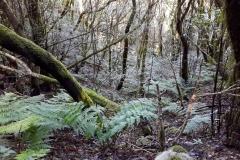 Bosque-Encantado-Anaga-Tenerife-22