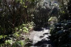 Bosque-Encantado-Anaga-Tenerife-25