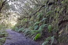 Bosque-Encantado-Anaga-Tenerife-26