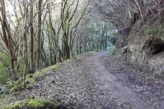 Bosque-Encantado-Anaga-Tenerife-28