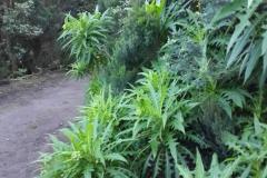 Bosque-Encantado-Anaga-Tenerife-29