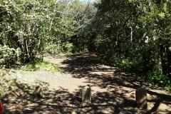 Bosque-Encantado-Anaga-Tenerife-3