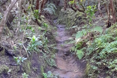 Bosque-Encantado-Anaga-Tenerife-31