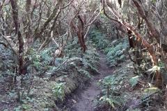 Bosque-Encantado-Anaga-Tenerife-32