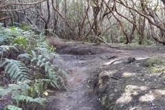 Bosque-Encantado-Anaga-Tenerife-33