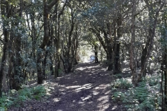 Bosque-Encantado-Anaga-Tenerife-36