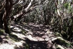 Bosque-Encantado-Anaga-Tenerife-4