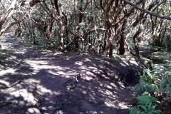 Bosque-Encantado-Anaga-Tenerife-5