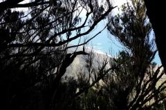 Bosque-Encantado-Anaga-Tenerife-9