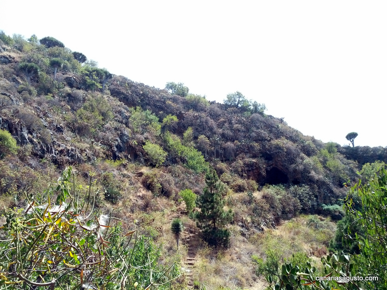 La-Palma-Islas-Canarias-Agosto-2013-71