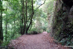 Bosque Laurisilva Los Tilos - La Palma