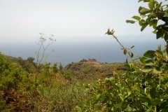 La-Palma-Islas-Canarias-Agosto-2013-70