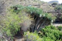La-Palma-Islas-Canarias-Agosto-2013-73