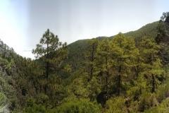 La-Palma-Islas-Canarias-Agosto-2013-96