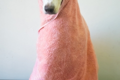 Zelda Dogue Model