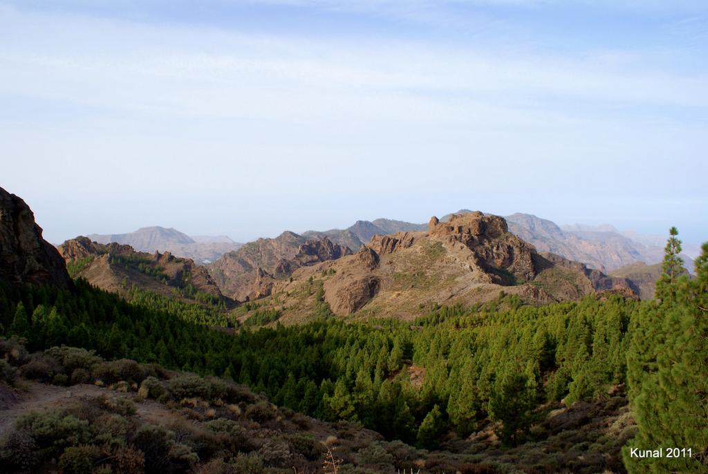 Los Pinos desde el Roque Nublo