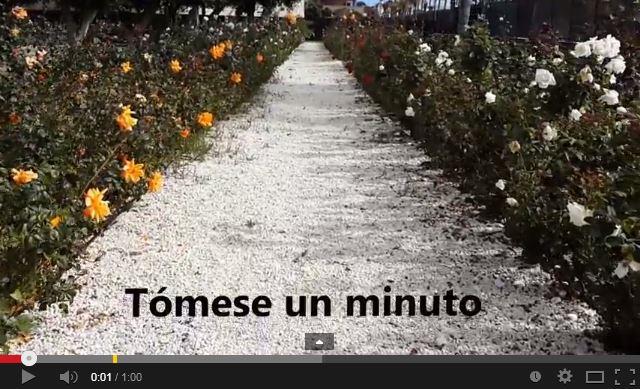 Jardin Colorido - Tómese un minuto