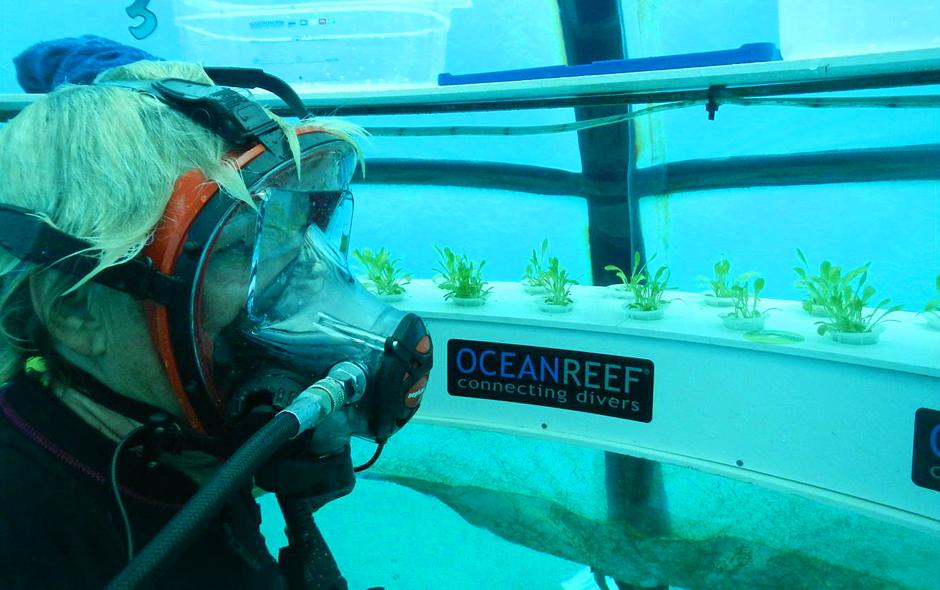 El Jardín de Nemo - Técnica para hacer agricultura submarina
