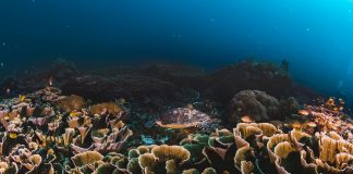 corals and sponges around a thriving tropical coral reef