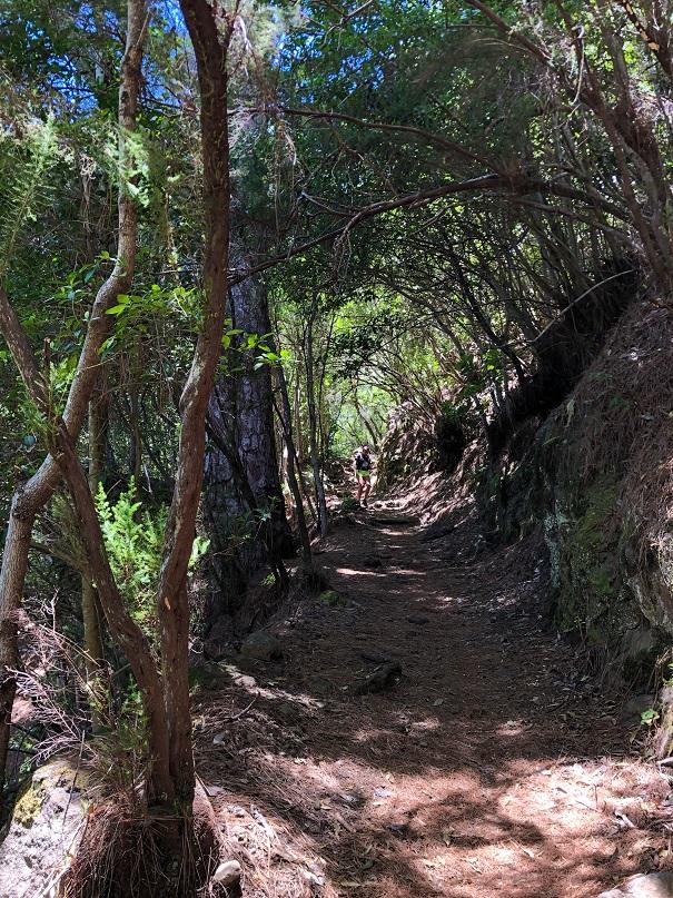 canagusto - marcos y cordero - frescor entre el bosque