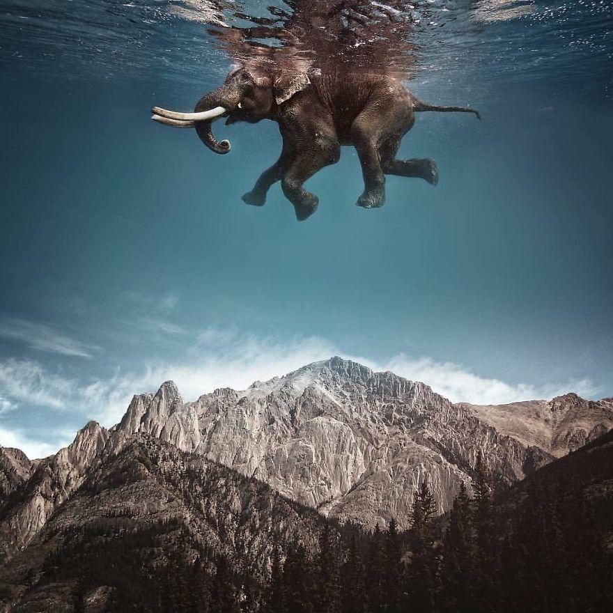 Elefante nadando y volando