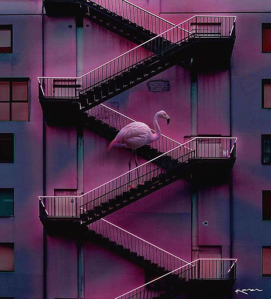 Flamingo en escaleares