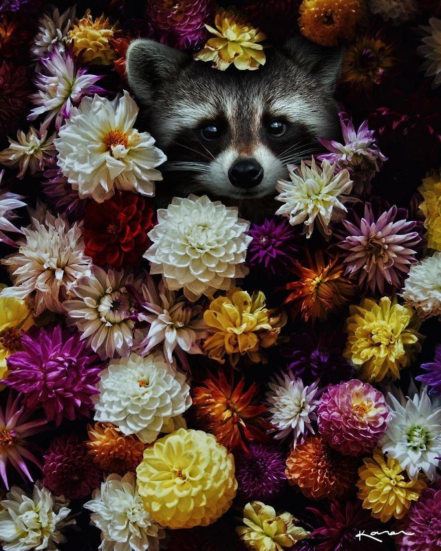 Mapache entre flores coloridas