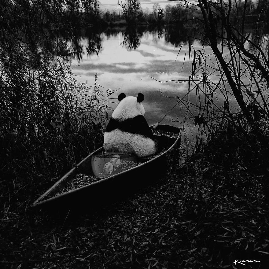 Panda pescando
