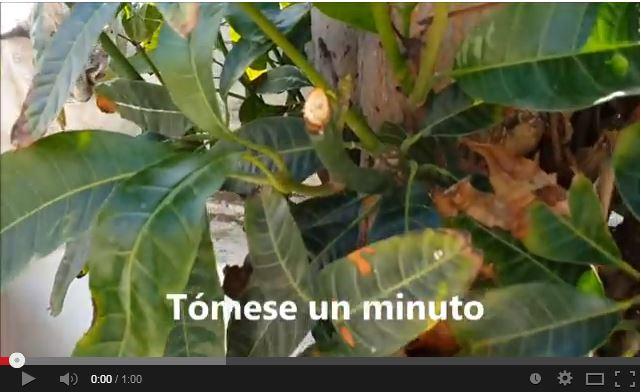 Emma Mimosa - Tómese un minuto