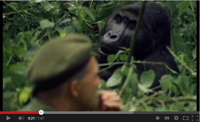 gorilla nature magic and man