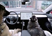 tesla-dog-mode-feature